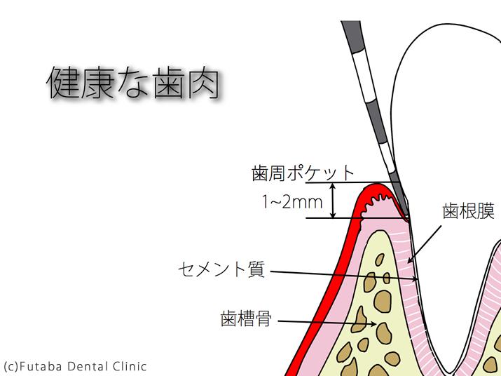 健康な歯肉new.004